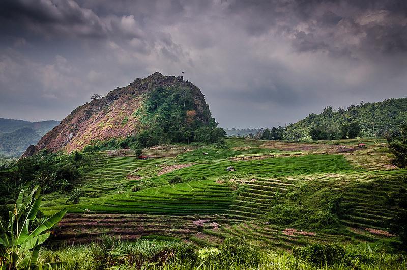 Heuvels met felgroene rijstvelden steken scherp af tegen de bewolkte hemel.