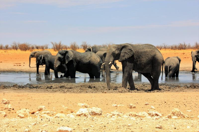 Kudde olifanten bij een drinkplaats (foto M-C)