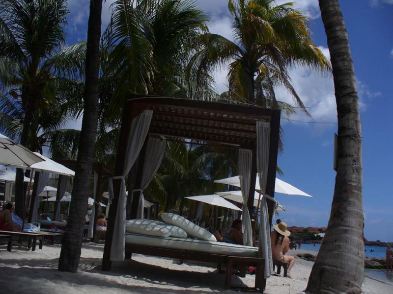 Zonnebedden tussen de palmbomen